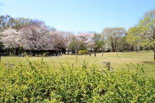 和光樹林公園の写真素材 [FYI01789201]