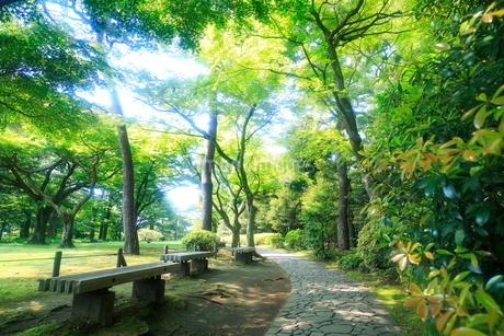 都立殿ヶ谷庭園の写真素材 [FYI01789217]