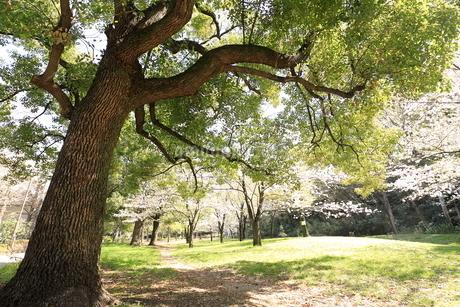 赤塚公園の写真素材 [FYI01789224]