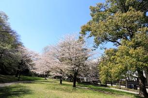 赤塚公園の写真素材 [FYI01789282]