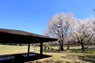 和光樹林公園の写真素材 [FYI01789285]