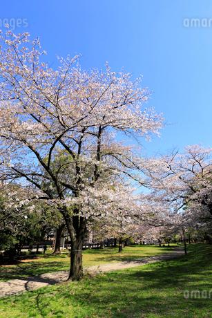 赤塚公園の写真素材 [FYI01789457]
