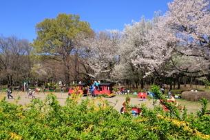 和光樹林公園の写真素材 [FYI01789497]