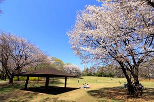 和光樹林公園の写真素材 [FYI01789507]