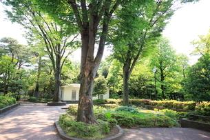 都立殿ヶ谷庭園児童遊園の写真素材 [FYI01789586]