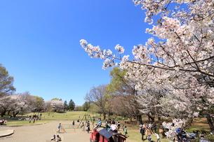 和光樹林公園の写真素材 [FYI01789593]