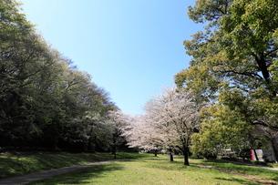 赤塚公園の写真素材 [FYI01789624]