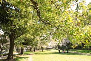 赤塚公園の写真素材 [FYI01789805]