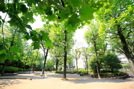 都立殿ヶ谷庭園児童遊園の写真素材 [FYI01789811]