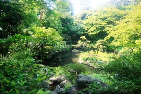 都立殿ヶ谷庭園の写真素材 [FYI01789816]