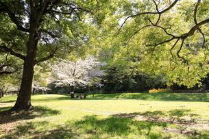 赤塚公園の写真素材 [FYI01789849]