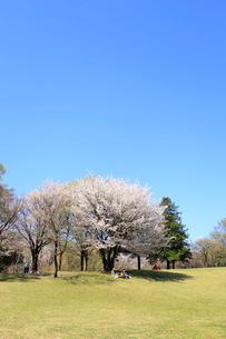 和光樹林公園の写真素材 [FYI01789867]