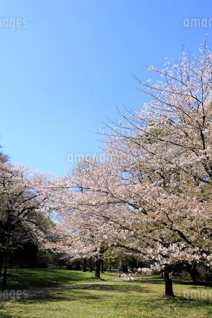 赤塚公園の写真素材 [FYI01789922]
