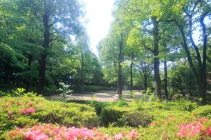 都立殿ヶ谷庭園児童遊園の写真素材 [FYI01789966]