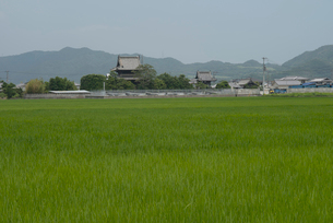 15番国分寺と田園の写真素材 [FYI01790126]