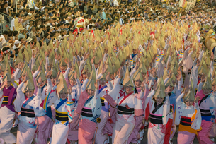 阿波踊り総踊りの写真素材 [FYI01790185]