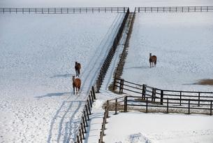 雪のサラブレッド牧場の写真素材 [FYI01790257]