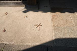 83番一宮寺の写真素材 [FYI01790364]