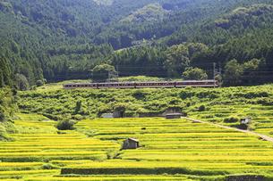 段々畑と電車の写真素材 [FYI01790432]