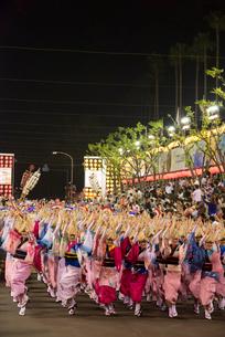 阿波踊り総踊りの写真素材 [FYI01790622]