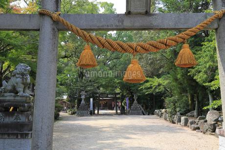 亀山神社の写真素材 [FYI01790741]