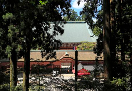木々の間から見る根本中堂の写真素材 [FYI01790954]