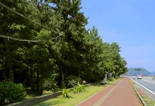 浜街道と花の窟神社の森の写真素材 [FYI01791077]