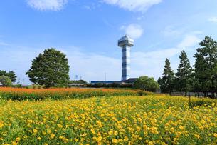 国営木曽三川公園と展望タワーの写真素材 [FYI01791294]