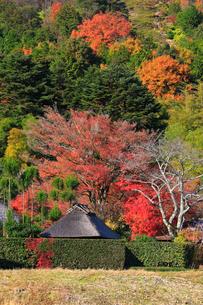 秋の嵯峨野鳥居本の写真素材 [FYI01791316]