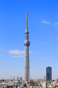 東京スカイツリーの写真素材 [FYI01791482]