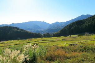 坂本棚田から望む新名神高速道路の写真素材 [FYI01791594]
