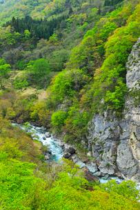 小滝川ヒスイ峡の新緑の写真素材 [FYI01791868]