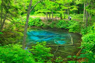 神の子池の写真素材 [FYI01791875]