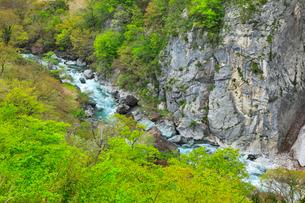 小滝川ヒスイ峡の新緑の写真素材 [FYI01791912]