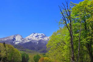 妙高高原・赤倉から望む妙高山の写真素材 [FYI01791914]