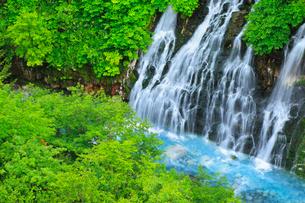 白ひげの滝と新緑の写真素材 [FYI01791980]