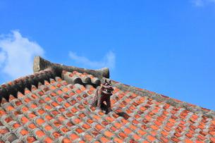沖縄・竹富島 赤瓦の屋根とシーサーの写真素材 [FYI01791989]