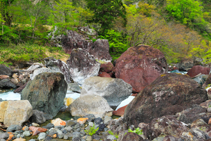 小滝川ヒスイ峡のヒスイ原石の写真素材 [FYI01792000]