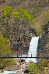 苗名滝と吊り橋の写真素材 [FYI01792039]