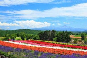 ぜるぶの丘と十勝岳連峰の写真素材 [FYI01792098]