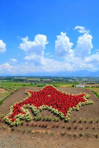 フラワーランドかみふらの 北海道の形をした花壇の写真素材 [FYI01792107]