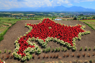 フラワーランドかみふらの 北海道の形をした花壇の写真素材 [FYI01792134]