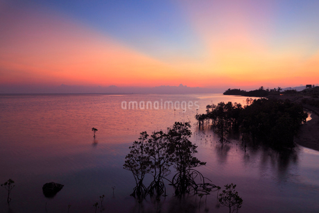 沖縄・石垣島 名蔵湾のマングローブ林と夕焼けに染まる海の写真素材 [FYI01792145]