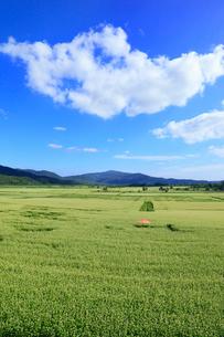 ソバ畑と青空に雲の写真素材 [FYI01792188]