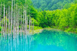 青い池と新緑の写真素材 [FYI01792213]