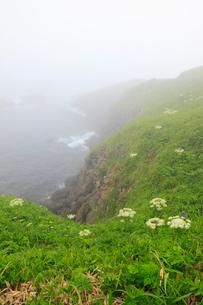 霧の花咲岬の写真素材 [FYI01792283]