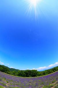 ハイランドふらの・ラベンダーの森に太陽の写真素材 [FYI01792299]