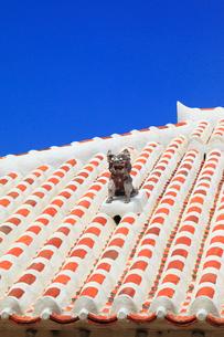 沖縄・竹富島 赤瓦の屋根とシーサーの写真素材 [FYI01792400]