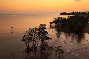 沖縄・石垣島 名蔵湾のマングローブ林と夕焼けに染まる海の写真素材 [FYI01792503]