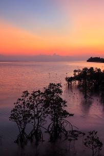沖縄・石垣島 名蔵湾のマングローブ林と夕焼けに染まる海の写真素材 [FYI01792504]